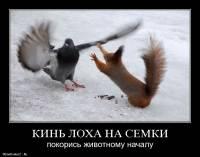 kin-loxa-na-semki